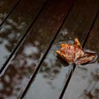 Im Garten kommt langsam der Herbst