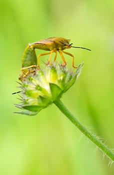 Sex auf der Blüte...