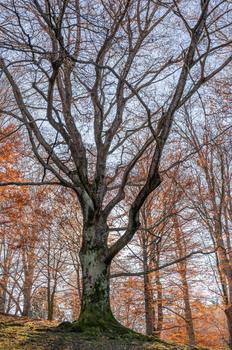 Lockdown Baum