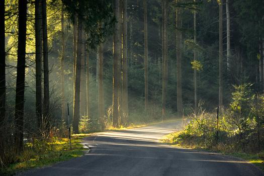 Lichtspiel an der Waldstrasse