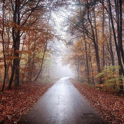 Strasse im Herbstwald