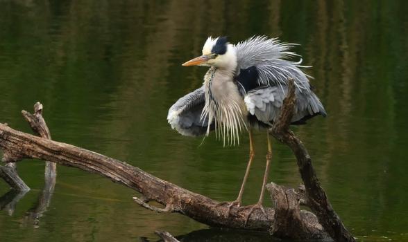 Ein schöner Vogel