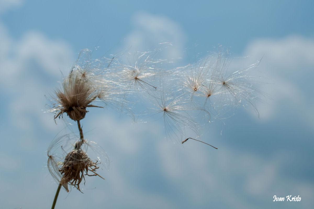 Wind macht eigene Bild 2