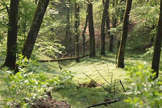 Schöner Wald Spaziergang