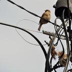 Nest bauen