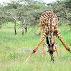 Zurück aus Tansania 6 - ziemlich beschwerlich für die nette Dame