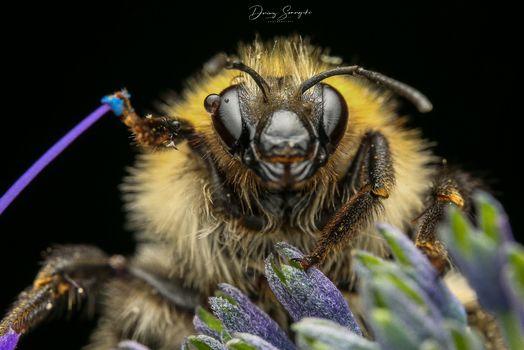 Bumblebee Star Wars  :-)