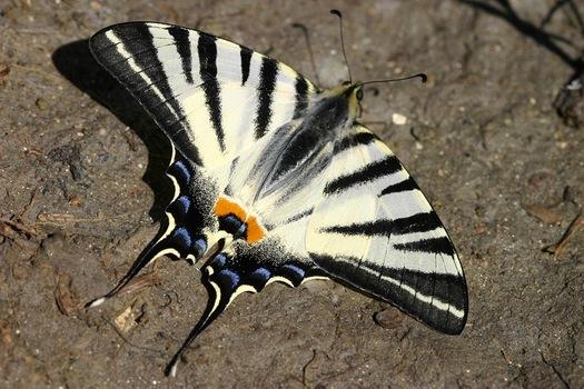 für Euch einfach ein Schmetterling