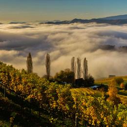 Südsteirisches Weinland