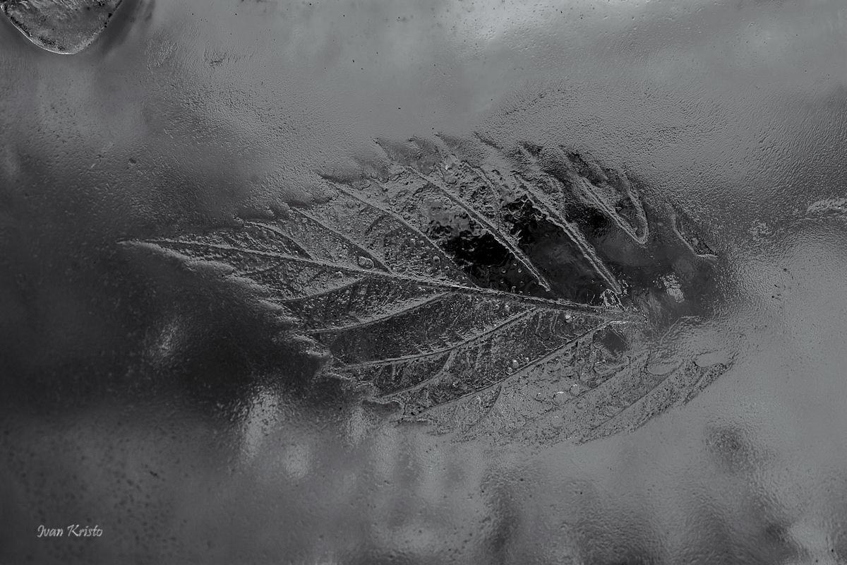 Spur ins Eis