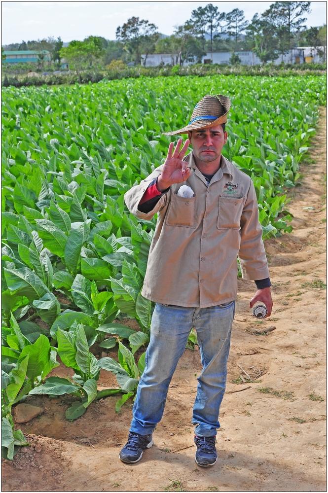 Kuba, Valle de Viñales, Tabakbauer