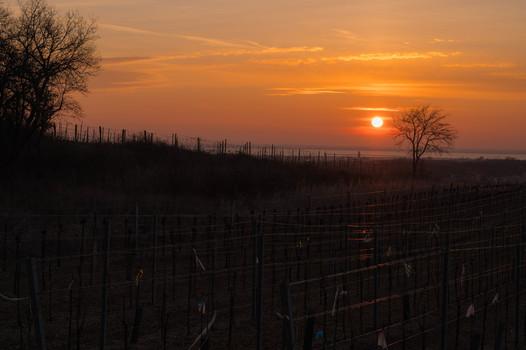 Sonnenaufgang über Ruster Weingärten