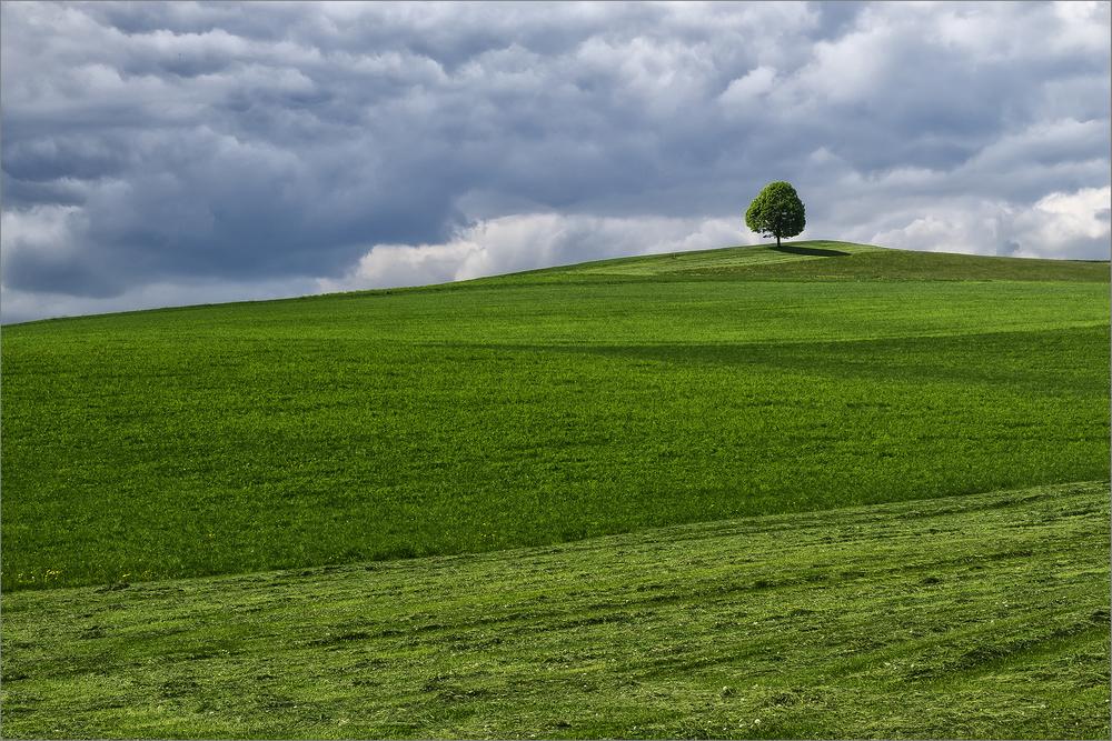 """""""Der Baum"""""""