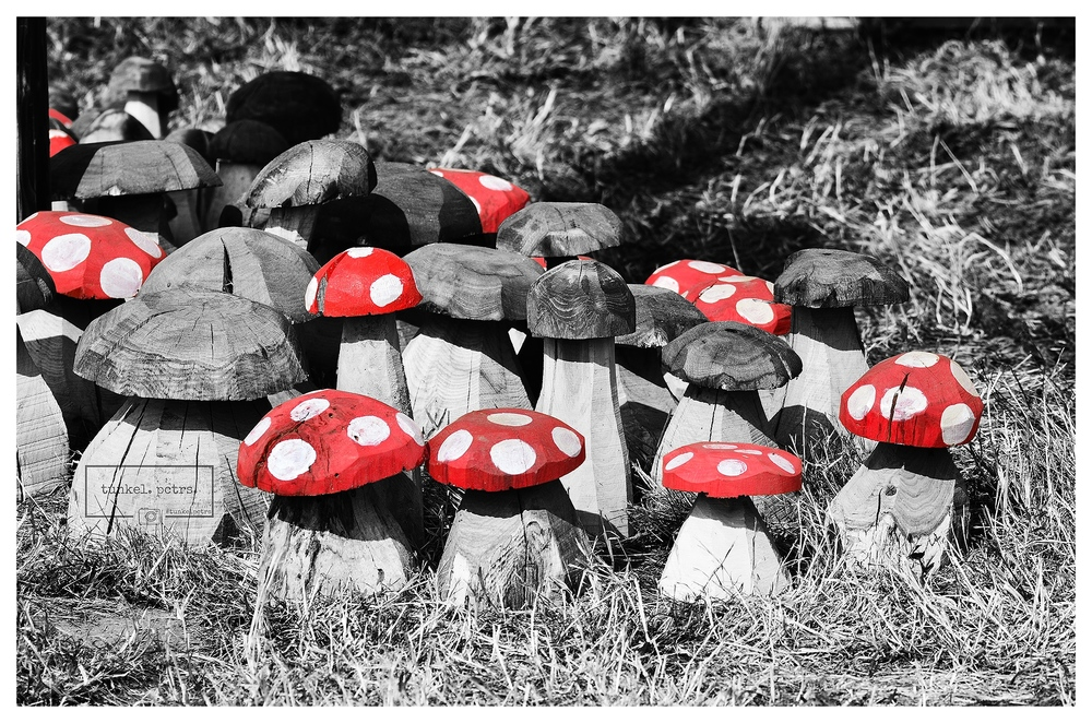 Colourful mushrooms