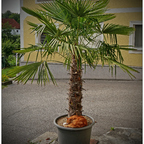 Träumen unter Palmen
