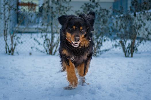 Elliot von der Wassernixe Action beim Ballspielen im Schnee