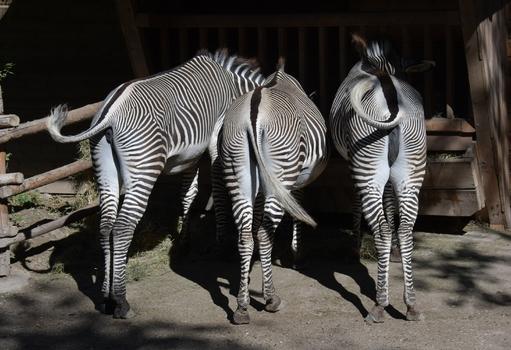 Drei schöne Rücken können auch entzücken :-)