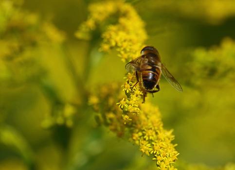 nicht nur für Bienen........