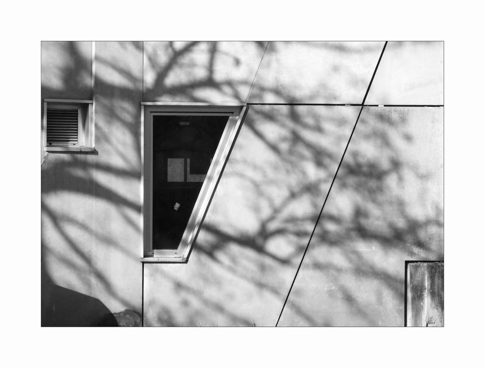 In der Stadt sind Bäume nur ein Schatten ihrer selbst . . . . .