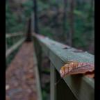 Blattbrücke