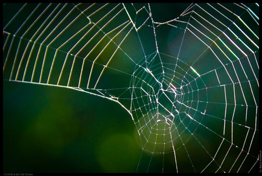 verlassenes Spinnennetz