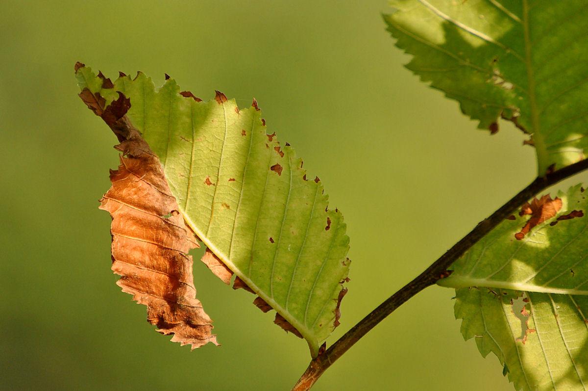 50 % Herbst