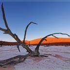 Deadvlei-Baum