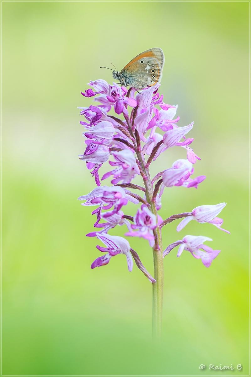 Der Orchideenliebhaber
