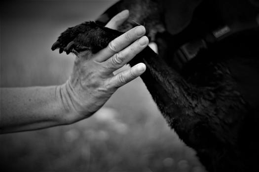 Mensch und Tier, ein Bund fürs Leben