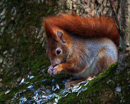 Eichhörnchen <3