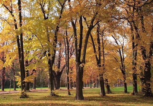 Bäume im Lainzer Tiergarten II