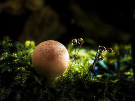 Pilze und Wassertropfen
