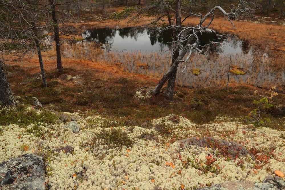 Skandinavische Herbstlandschaft