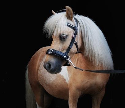 Pferdepotrait