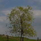 Bewundernswerter Baum....