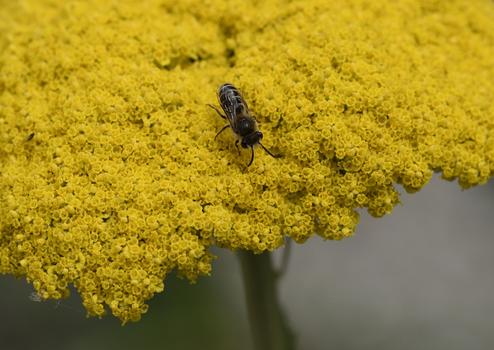 Insekt und Blume