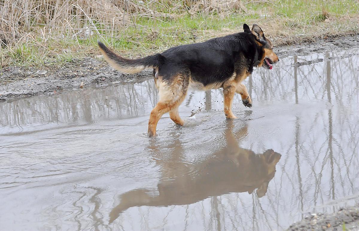 Sie mag Wasser