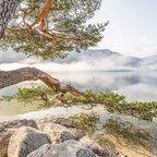 der wohl meistfotografierte Baum im Ausseerland