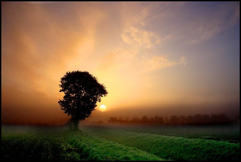 frühes Licht