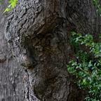 Der Geist des Baumes