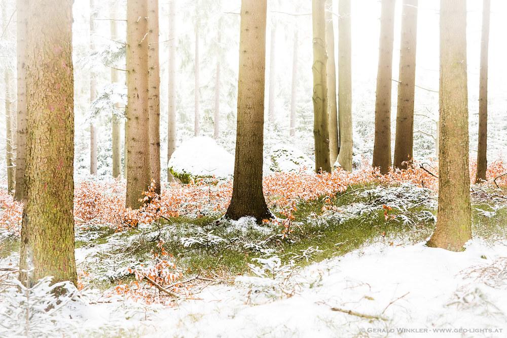 winterlich bunt