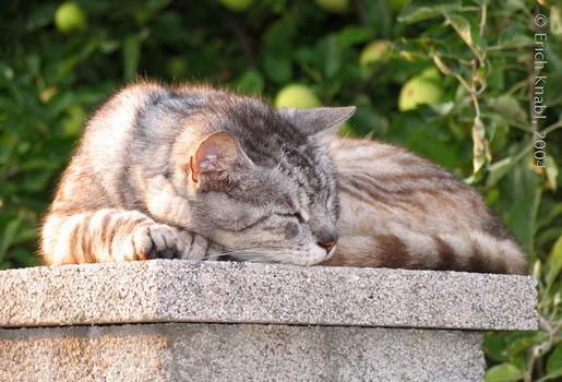 Nachbarins Katze
