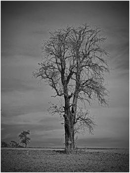kahler Baum_2