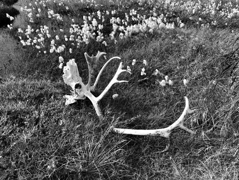 Tod im Sumpf