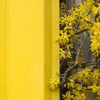 Heute hab ich's mit Gelb