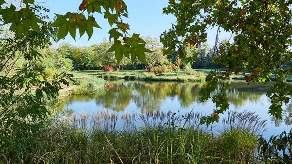 Herbst im Park II