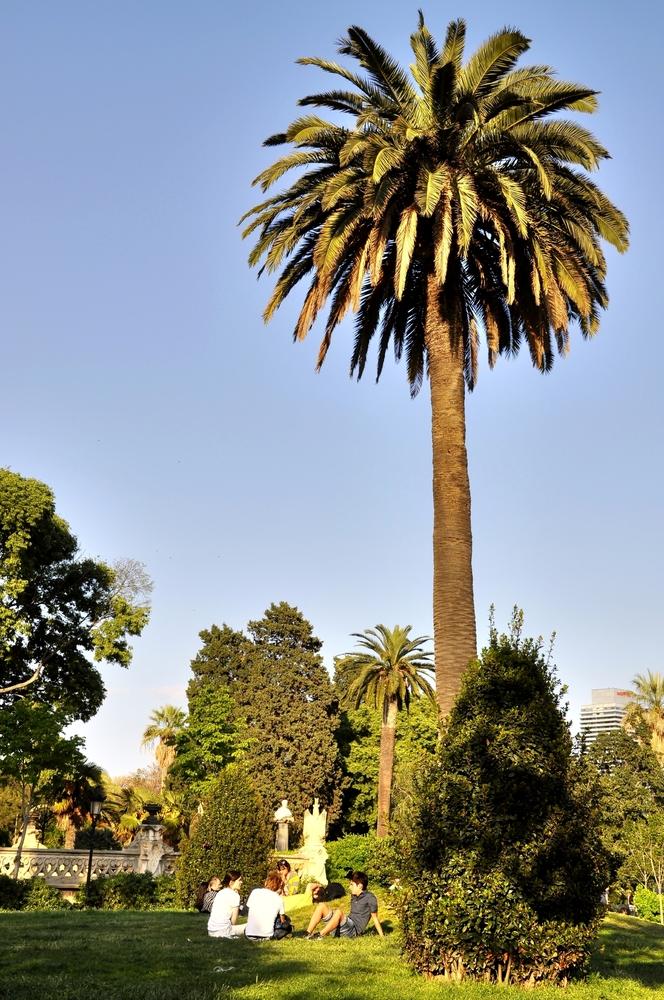 Treffen unter Palmen...