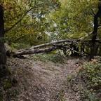 Chaos im Wald