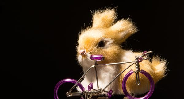 Hase fährt Rad