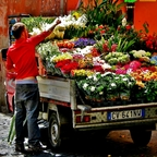 ...der Blumenhändler...